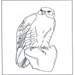 Ausmalbilder Tiere - Falke