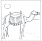Kamele in der sonne