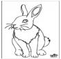 Kaninchen 4
