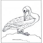 Ausmalbilder Tiere - Pelikan