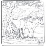 Ausmalbilder Tiere - Pferd 6