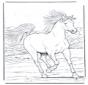 Pferd in Galopp