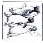 Ausmalbilder Tiere - Pinguin 1