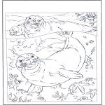 Ausmalbilder Tiere - Seehunde
