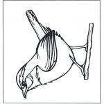 Ausmalbilder Tiere - Zaunkönig
